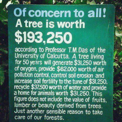 Vad är ett träd värt