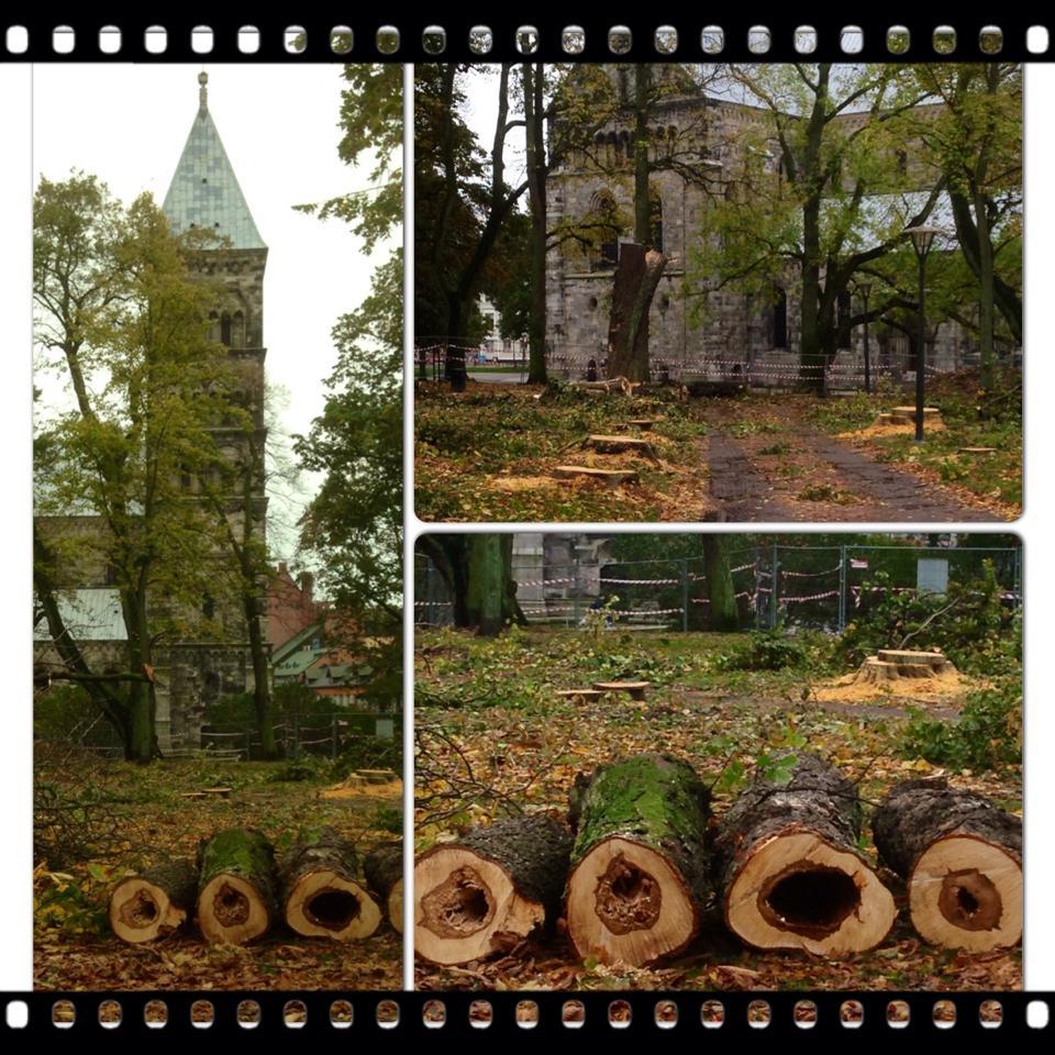 Trädfälle i Lundagård